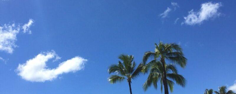 なんでもハワイに関する記事いろいろ